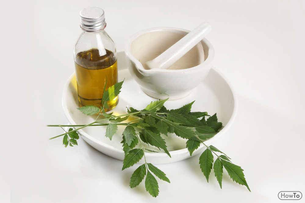 How to Repel Stink Bugs Neem Oil